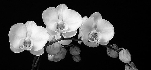 cropped-orchids.jpg